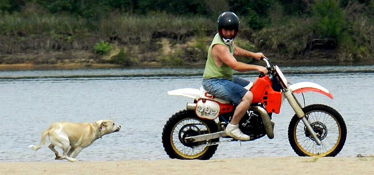 How to Handle Dogs Chasing Your Motorcycle